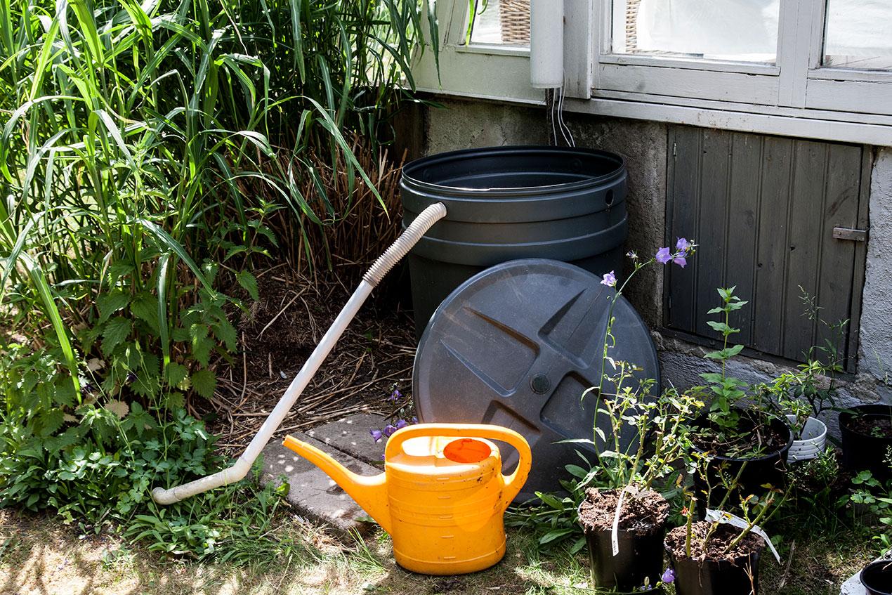 Svart plasttunna för regnvatten, slang ut från ovansidan av tunnan, vattenkanna bredvid