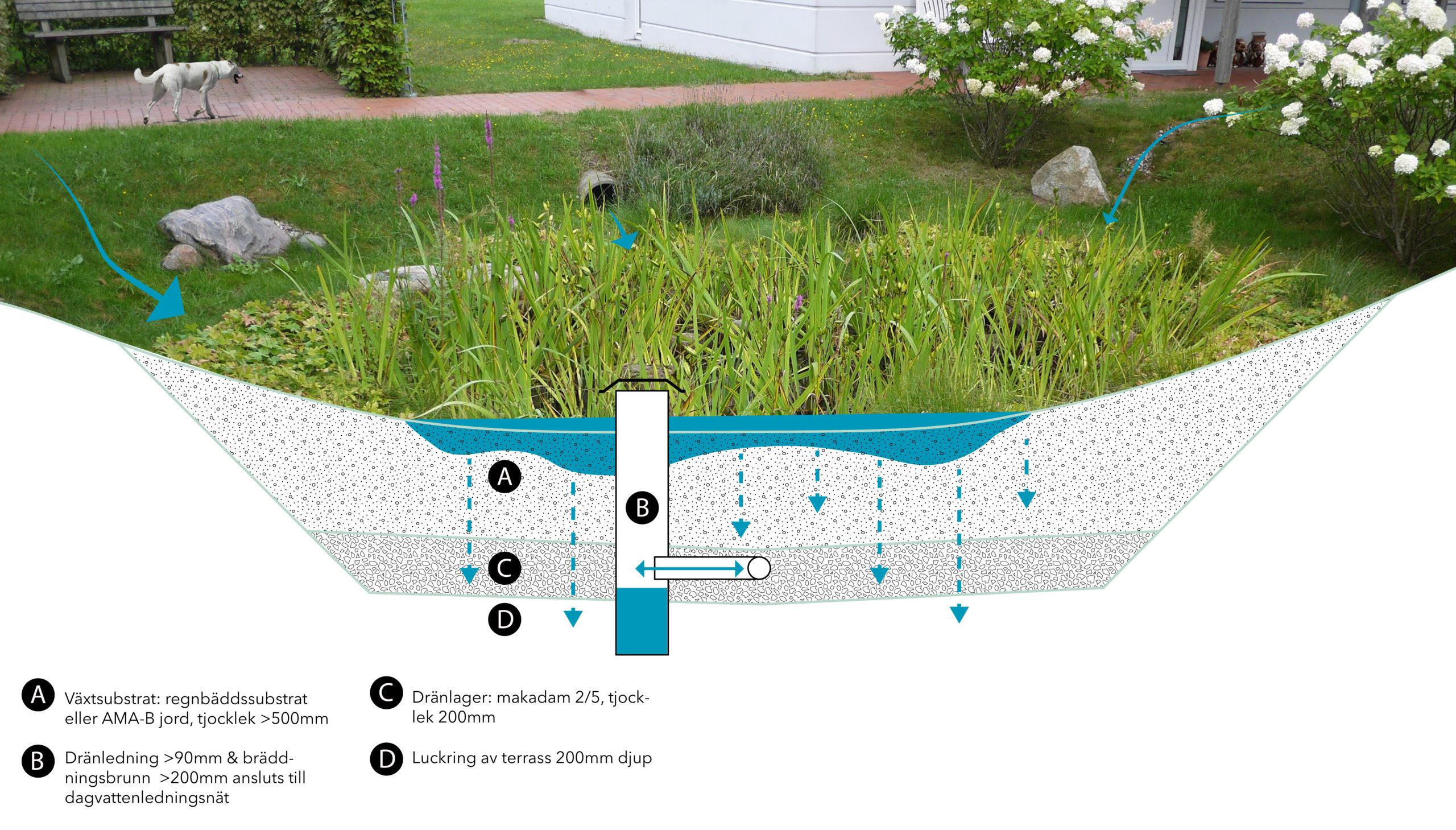 Grönskande nedsänkt rabatt med illustration över konstruktionen under mark