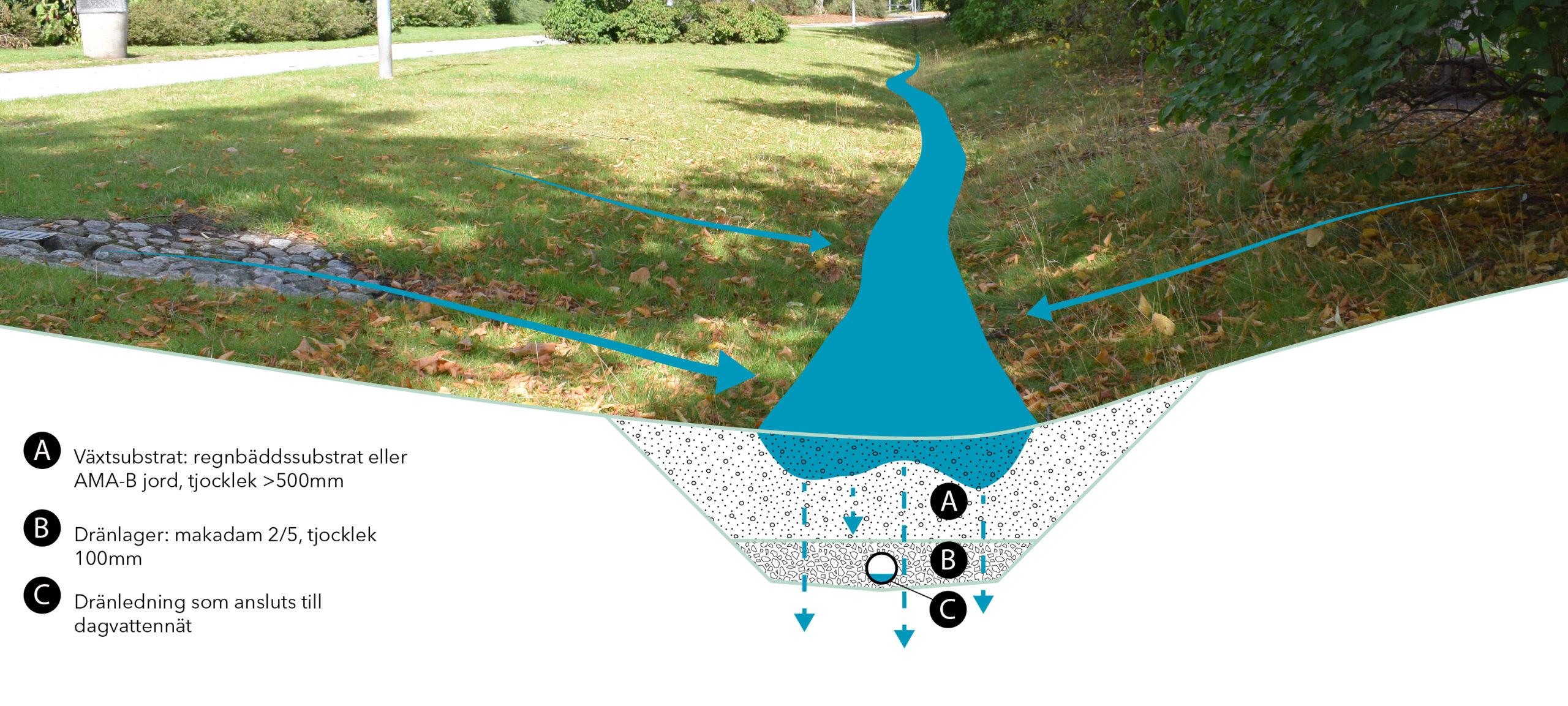 Grönskande svackdike med illustration över konstruktionen under mark