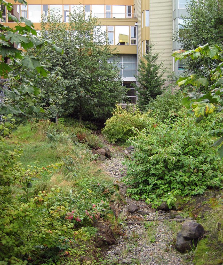 grusgång genom uppvuxen grönska, kontorshus i bakgrunden
